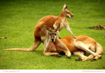 Mr and Mrs Roo