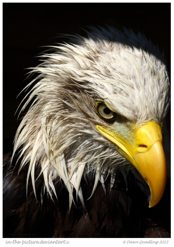 Desperado II by In-the-picture
