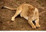 Chillun Lioness