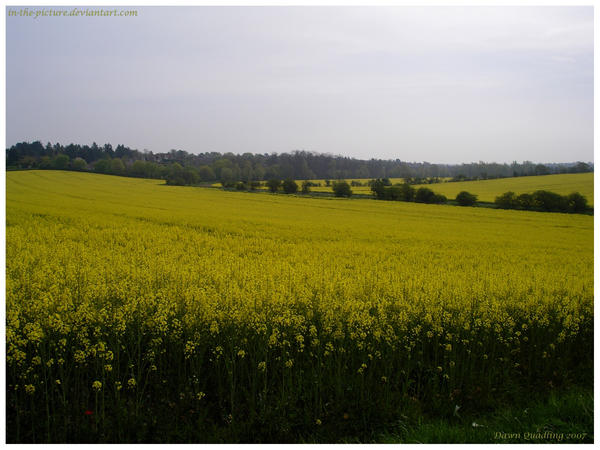 Golden Fields by In-the-picture