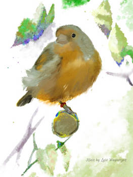 Domestic canary portrait