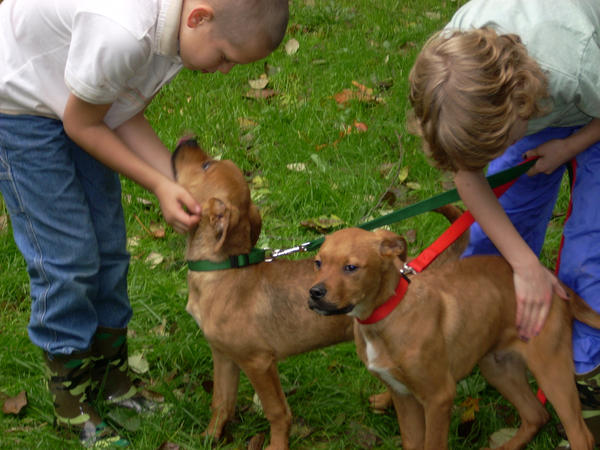 Image Result For Leash Training An