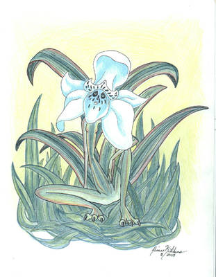 White Lilly Gargan by skyrere