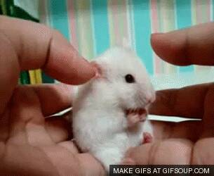 Adorable mouse gif by DerpyHamsterArtist