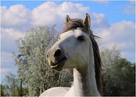 Cheval de Camargue 2 by Ghislaine-L