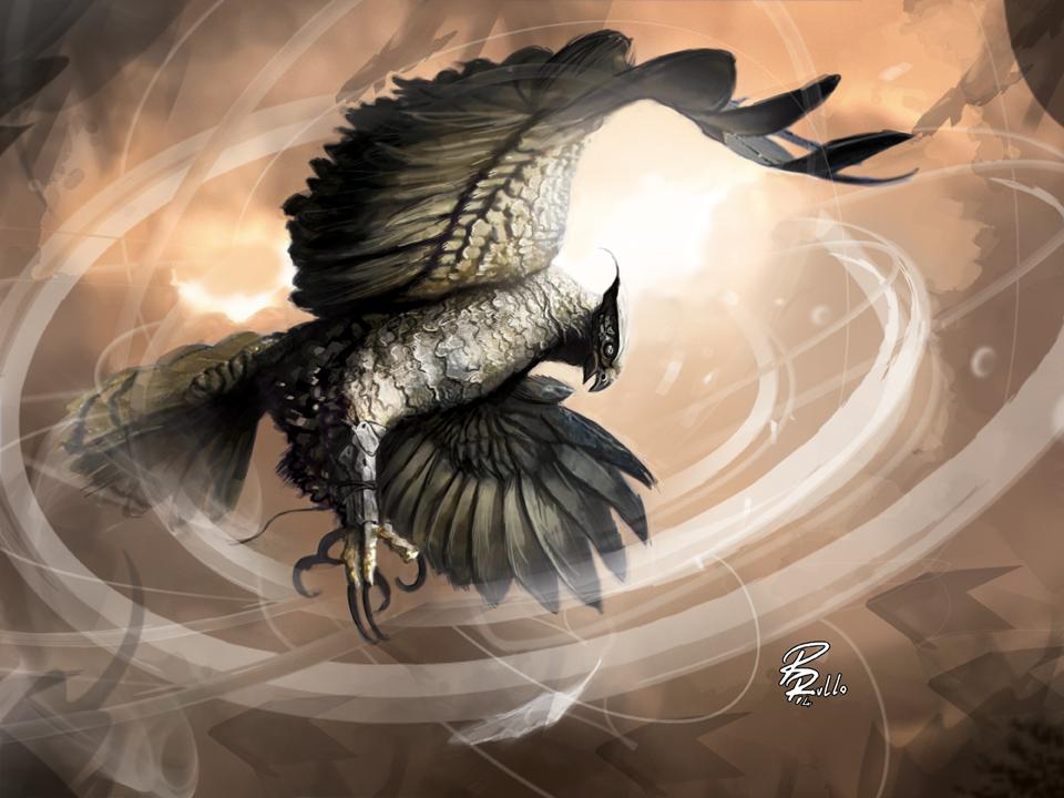 Portfolio: Suntail Hawk by shiprock