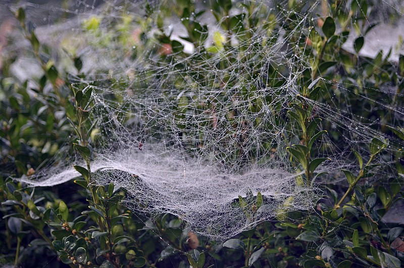 Webs by Lumicenta