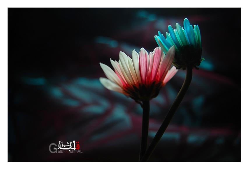 love her by GalB-ALshmAL