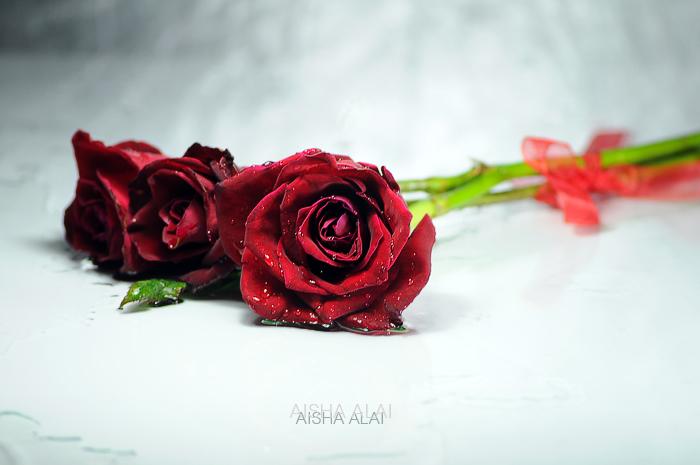 purity by GalB-ALshmAL