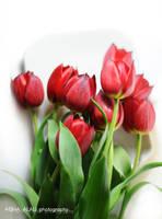 Tulip 2 by GalB-ALshmAL