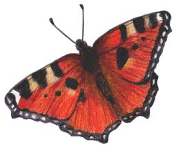 Butterfly by meri-chanP