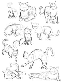 Cat Gestures