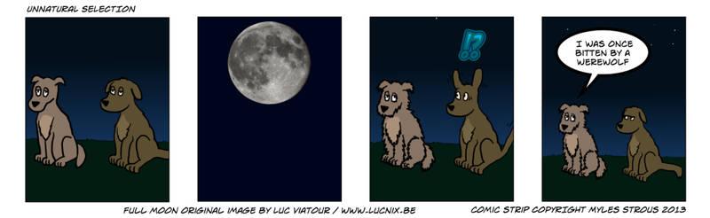 Aint-nuthin-but-a-moondog-1024