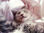 Please hug me while I'm sleeping!