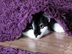 Hush, I'm hiding! Don't give me away!