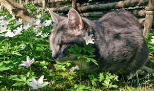 Does this flower go with the colour of my fur?