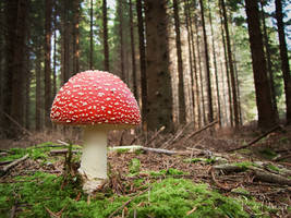 Toadstool on a pillow of moss by RavenMontoya