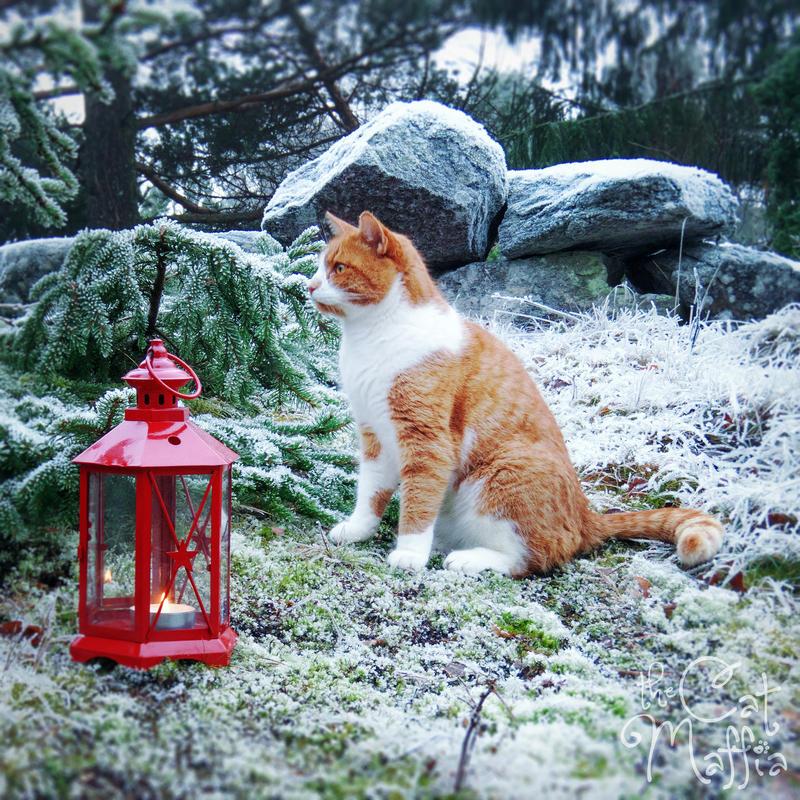Look, look, look! Santa is coming! by RavenMontoya