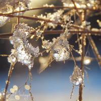 Winter Tears by RavenMontoya