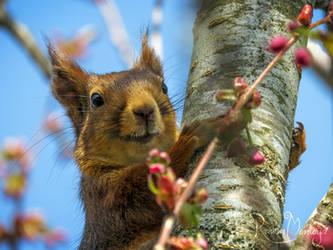 The Happy Squirrel by RavenMontoya