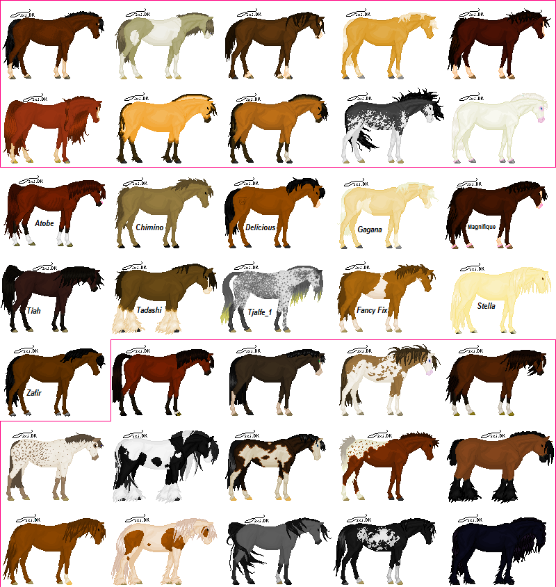 1000 Images About Horses On Pinterest