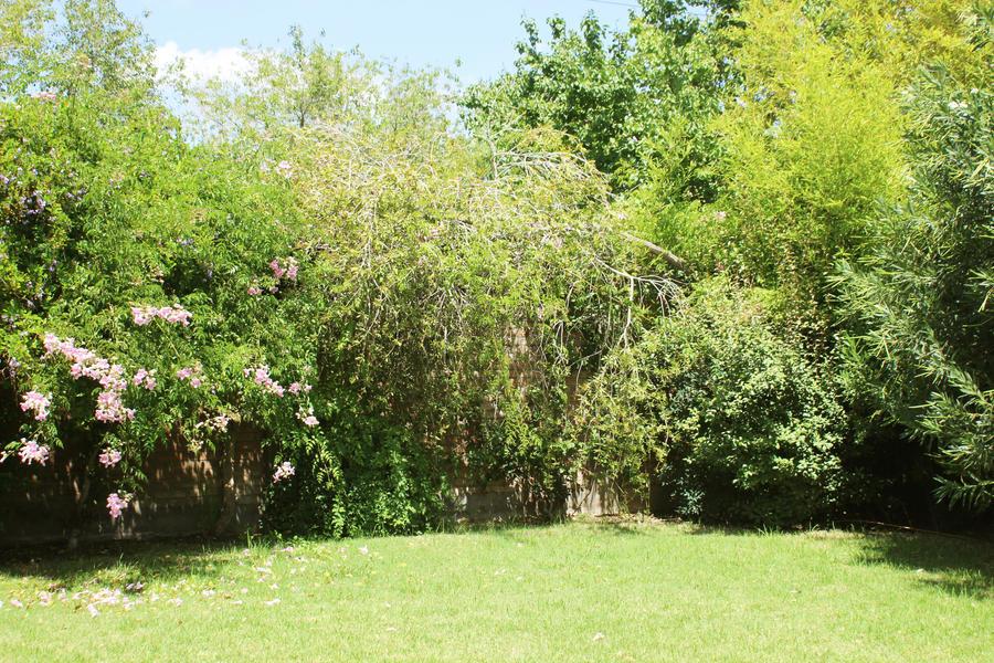 Green garden (original) by FlorDiM on DeviantArt