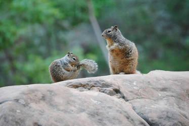 Squirrels of Utah  by Dinolover3