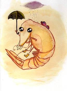 The Rain Shrimp