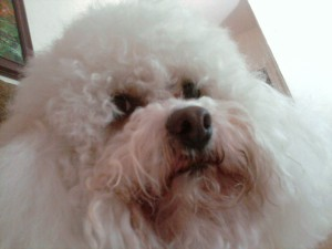 Cat-reena's Profile Picture