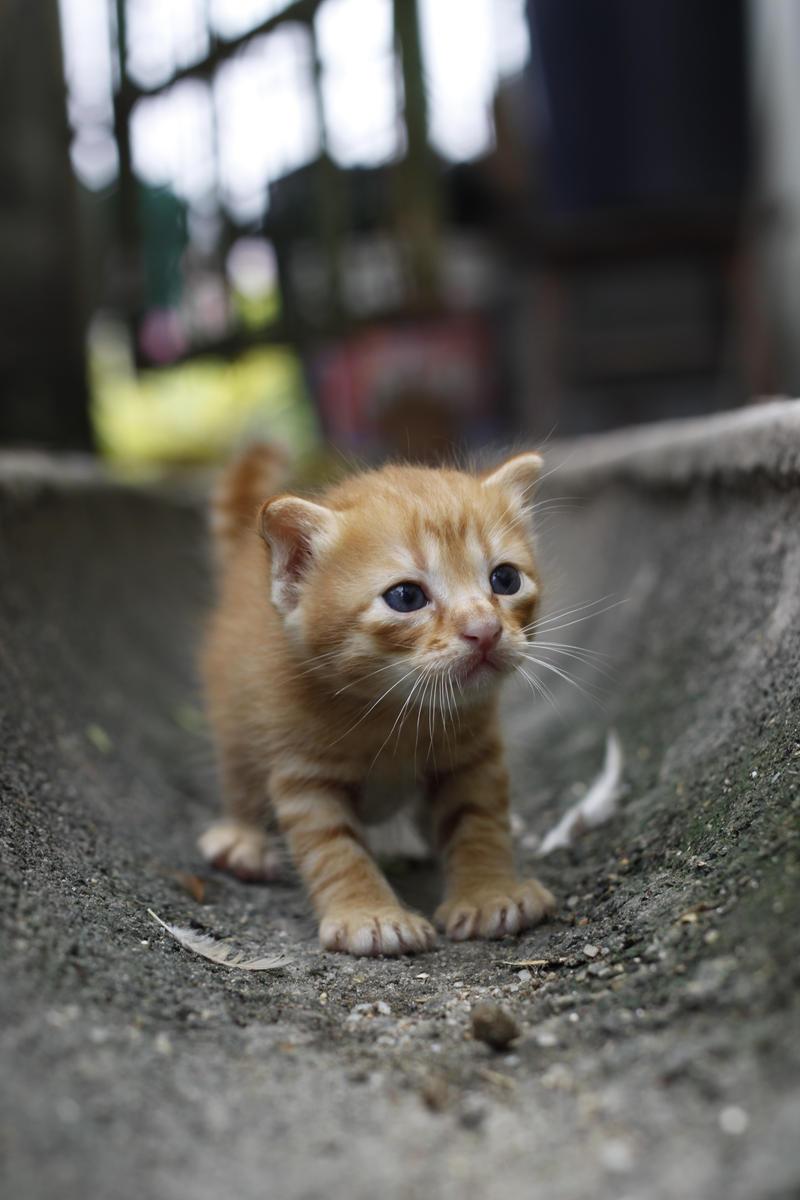 Aunt_Lanny__s_Kitten_II_by_wanchenghuat.