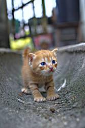 Aunt Lanny's Kitten II - HDR by wanchenghuat
