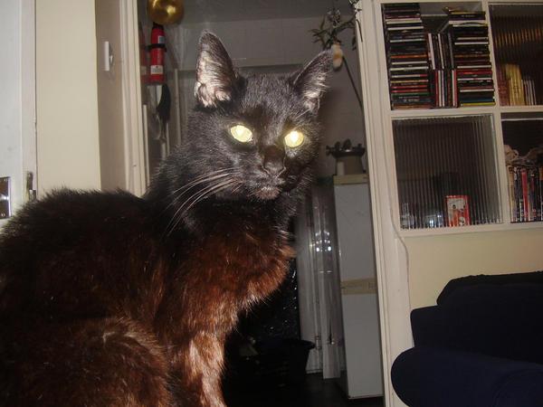 basement cat mother 3 by darla illara on deviantart