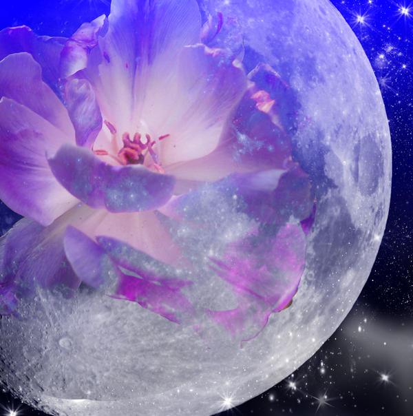 Цветы на луне
