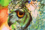Eye of Owl by Fco-G