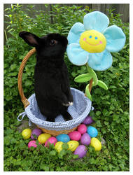 Easter Bunnies: Jerry
