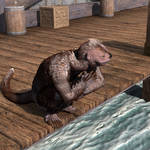 Otter on the docks