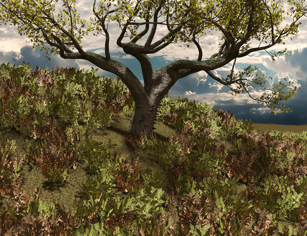 Leafy Hill by Willbear