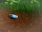 Blue Jay Hunt