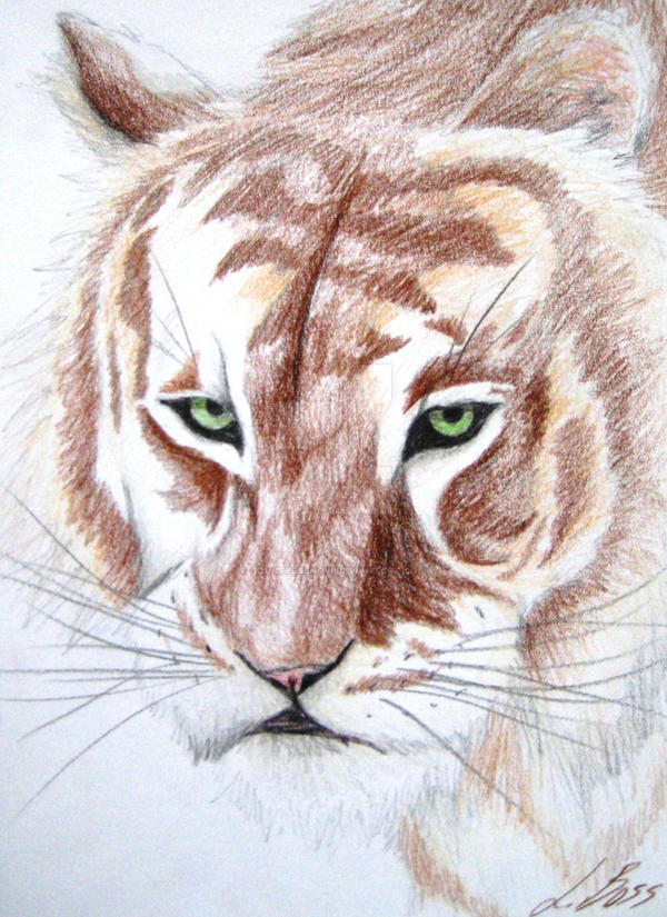 brown tiger print wallpaper - photo #14