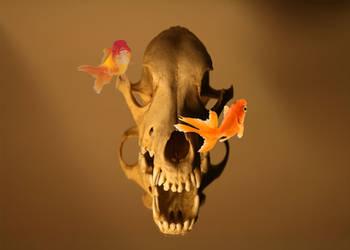 Skull n Goldfish by somasal