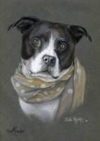 Shelby by KateVigdis