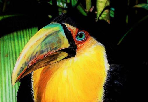 Toucan (drawing)