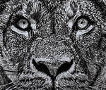 Lion (ink drawing)