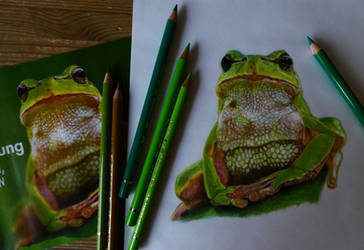 Frog (drawing and reference pic) by FlyinFreak