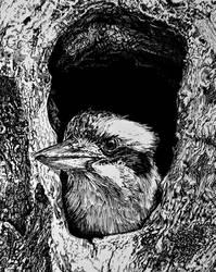 Kookaburra (ink drawing)