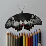 Orchard Swallowtail (drawing) by FlyinFreak