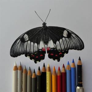 Orchard Swallowtail (drawing)