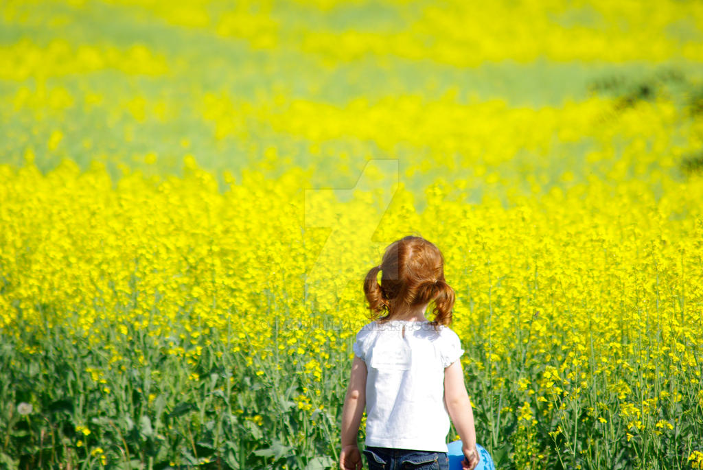 Considering Canola by taotu