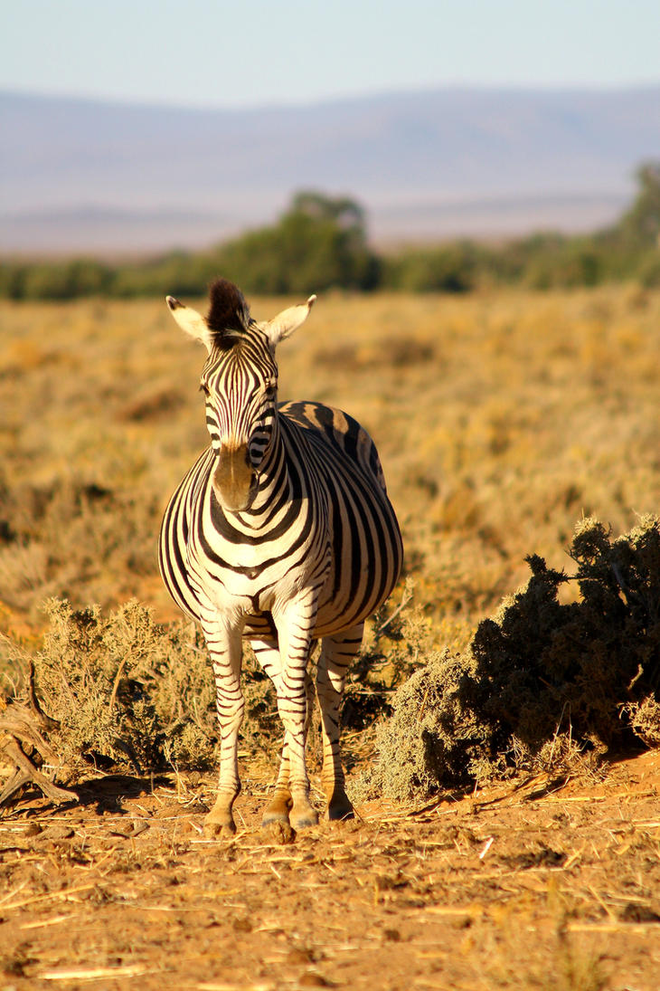 Zebra Crossing by Closer-To-You