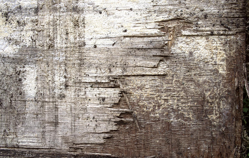 Wooden Texture 1 by stock-photo
